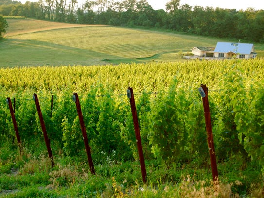 Take a drive to Black Ankle Vineyards in Mount Airy,