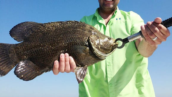 Tripletail are moving in at the Biloxi Marsh.
