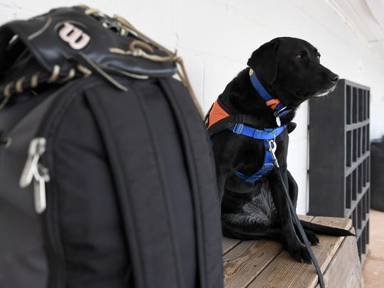 Freckles, Trey Sherrill's service dog, sits in the dugout as the South Gibson baseball team prepares to do field maintenance at Medina Lions City Park in Medina, Tenn., on Friday, May 5, 2017.