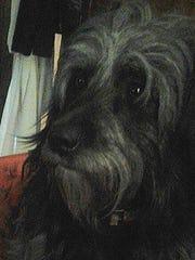 Baby George, Mary Walmsley's service dog