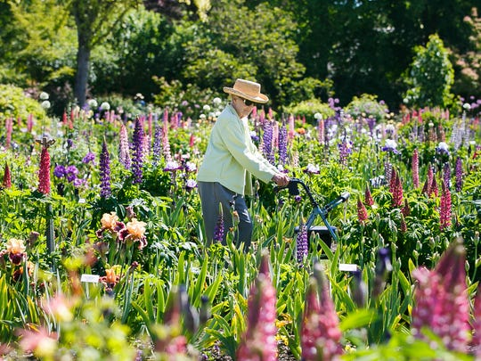 Donna Schmitt walks through rows of iris and lupin at Schreiner's Iris Gardens in Salem on Friday, May 19, 2017.