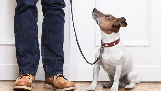 If you received a new dog for Christmas, here's your chance to get him or her schooled in good manners.