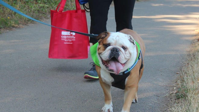 Dogs such as this one will be walking at the 4th annual Walk-n-Wag on Saturday at Minto-Brown Island Park to raise money for Willamette Valley Hospice's Pet Peace of Mind program.