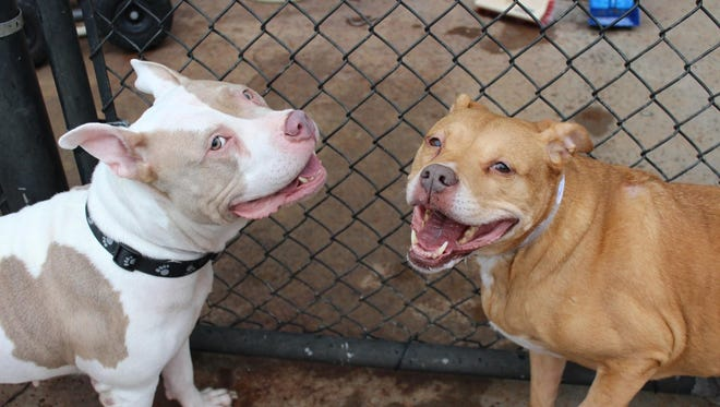 Lexi and Raydiance are available at Young-Williams Animal Center and must go home together.