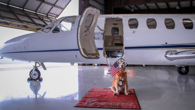 Sadie the Aviation Dog poses Friday, Jan. 9, 2018, in her work outfit in a hangar at Innisfree Jet Center in Pensacola.