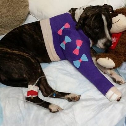 Cabela recovers with a special wrap on her shoulder