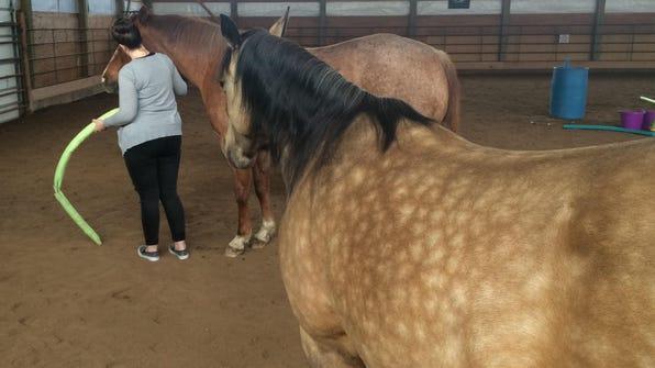 horses and Rachel