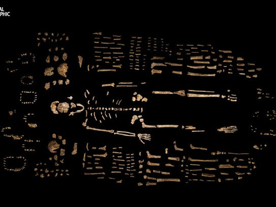 A composite skeleton of H. naledi is surrounded by