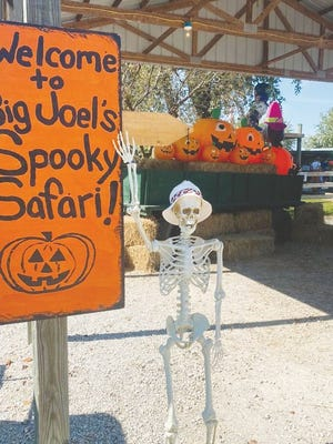 Big Joel's Safari Petting Zoo and Educational Park is more than just your average petting zoo.