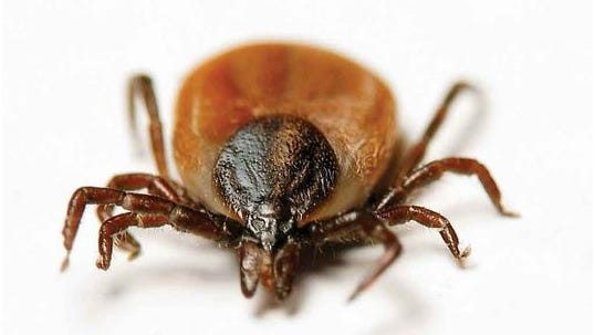 The earlier the tick is located and removed, the less the chance of being infected with a tick-borne disease.