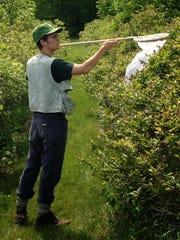 Charlie C. Nicholson nets pollinators on a Chittenden