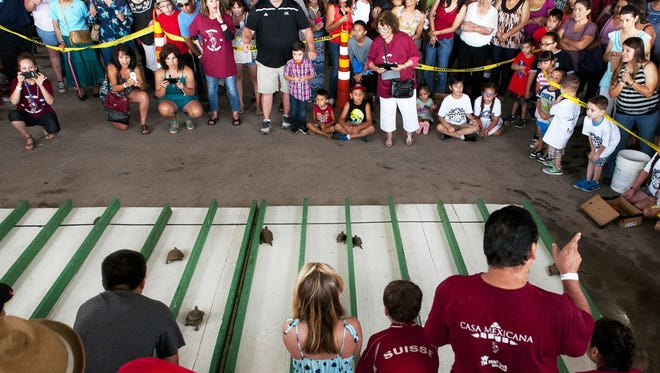 A huge crowd gathered for the 28th annual Tortugas Turtle Races at the Parish of Our Lady of Guadalupe. This year's Turtle Derby takes place on Sunday, June 24.