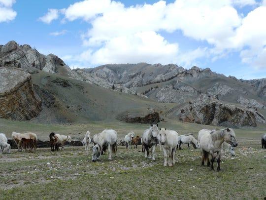 1 FAL 1204 Mongolia
