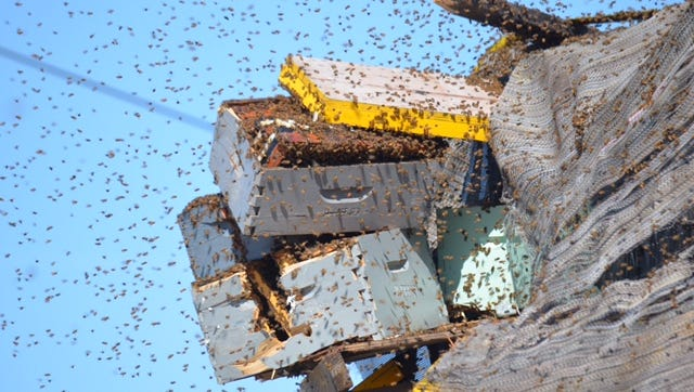Millions of bees were on a semi truck that was damaged in a collision Monday on Interstate 10. Most were removed safely.