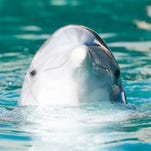 Montini: Another inmate dies at Dolphinaris, Arizona's dolphin prison