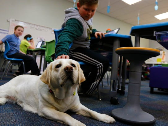 Fifth-grader Ethan Muzynoski, 11, pats Bella, a therapy dog who is part of the multi-age classroom. Bella can help to calm students and also provides an opportunity for students to learn responsibility, as they help to make sure she has fresh water.