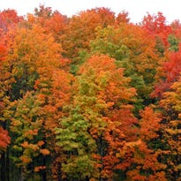 When Michigan's fall colors will peak in 2017