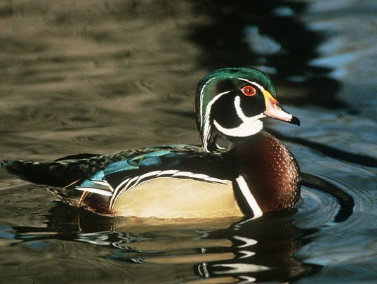 outdoor-ducks.jpg