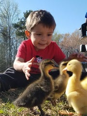 Kane Scott, who died in August at 2 years old, plays with baby ducklings earlier this year.