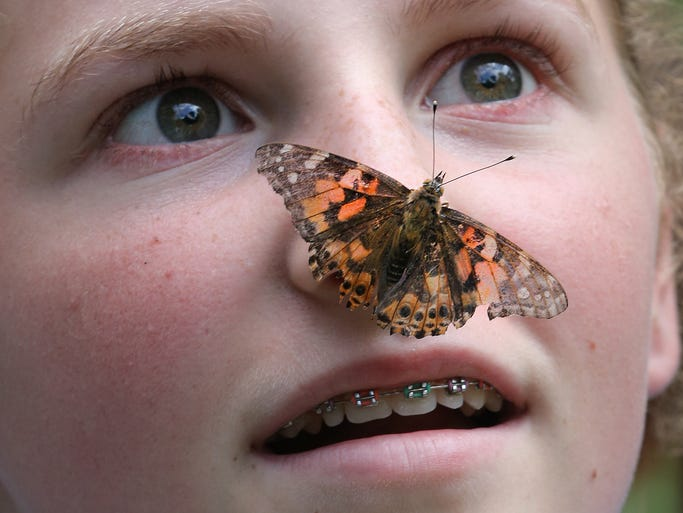 Allison Knight was amazed as a butterfly landed on her nose during the annual Bug Fest Sunday, August 24, 2014, afternoon at Southeastway Park.