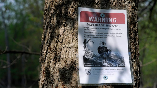 Warning signs posted along the Red Cedar River in Lansing urge onlookers to stay away from the bald eagle nesting area near the Potter Park Zoo.