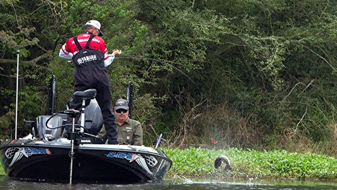 Professional bass anglers from the Bassmaster Elite series will be competing in a $100,000 bass tournament this week-end in Georgetown during the Winyah Bay Heritage Festival.