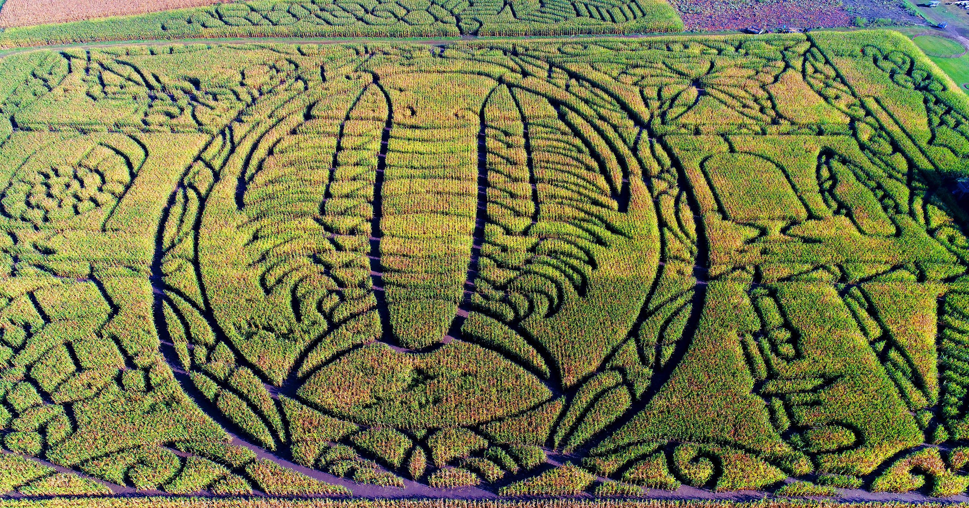 Corn mazes: Get lost at 10 Wisconsin seasonal sites