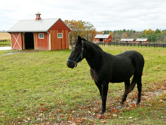A horse at Allerage Farm in Sayre, Pennsylvania on