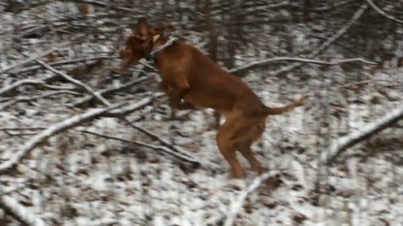 Bertie, taking a flying leap.