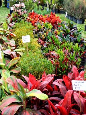 More than 40 plant and garden vendors from throughout the state will be at the Botanical Fest.