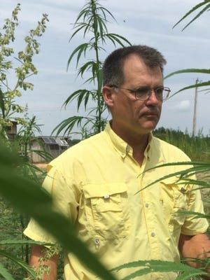 Rep. Jay Reedy stands among some of the hemp plant he grew last year to experience the process of growing industrial hemp as a farmer.