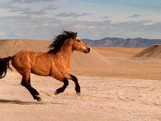 -Wild Horse Roundup 1.jpg_20120930.jpg