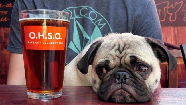 A pug eyes a beer at O.H.S.O. Eatery and Nanobrewery in Phoenix.