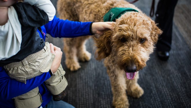 "Dogs in the Wag Brigade program at SFO have been carefully selected for their temperament and ""airport suitability."""