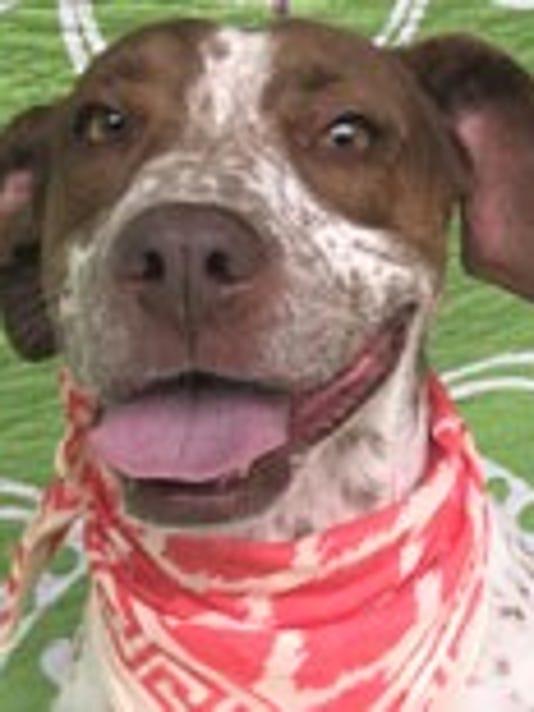 TCTC-pet-adoption-Lulu.jpg
