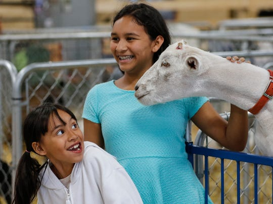 Kimberly Olivas, 8, reacts after Shivers pulled her hair as her and her sister Abigail, 13, were getting their picture taken with the pet goat at the Manitowoc County Fair Saturday, Aug. 26, 2017, in Manitowoc, Wis. Josh Clark/USA TODAY NETWORK-Wisconsin