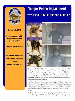 Tempe police released images of stolen puppies and thieves.
