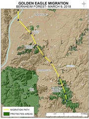Golden eagle Harper's journey north has just started