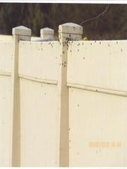 Photos submitted to the city of La Quinta by neighboring residents show fences covered in flies.