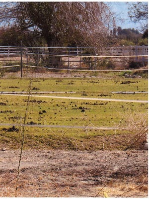 Photos submitted to the city of La Quinta by neighboring residents show the polo pasture covered in manure at 54721 Monroe St., La Quinta.