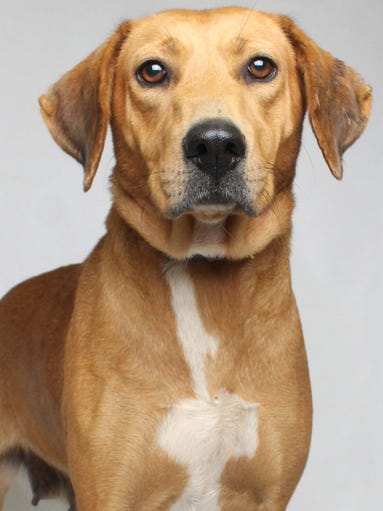 Lulu is a talkative, gentle 4-year-old Hound mix who's