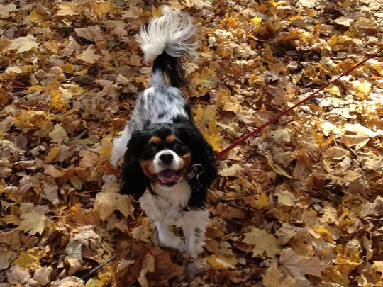 Charlie is so happy. Leaves, remember those?