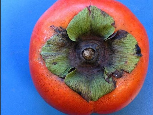 When ripe, persimmons are yellow to orangey red, round, pointed in an acorn shape, or flatter like a tomato.
