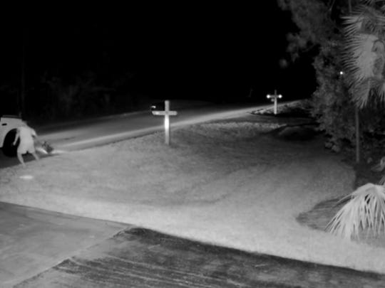 The videos show a man exit a company pickup, steal a Trump campaign sign from a front lawn and then urinate near the house's mailbox.