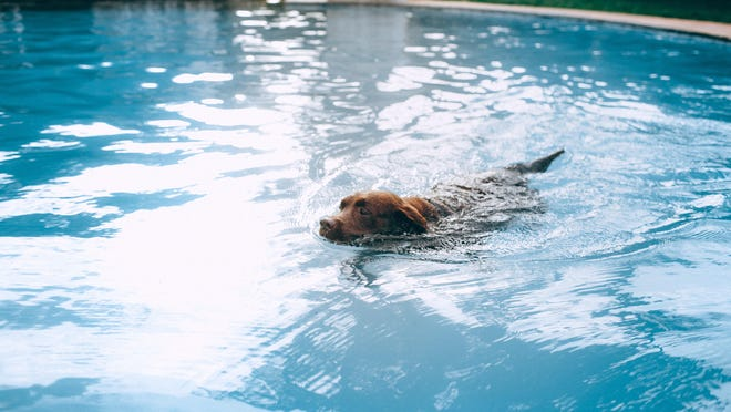 To ensure a safe summer of swimming, never leave your dog in the pool unsupervised.