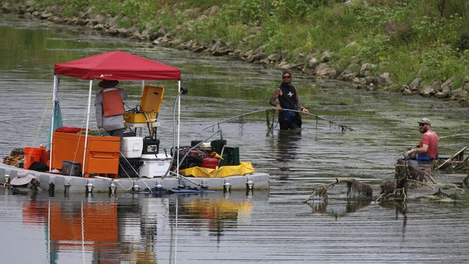 Crew members from EnviroScience, of Stow, including commercial divers collect mussels from the Tuscarawas River in Massillon. The freshwater creatures are protected in Ohio and must be relocated before the start of a rehabilitation project of the nearby levee.