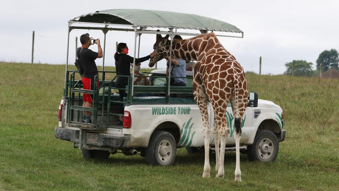 "A tour visits with a giraffe at The Wilds. The premium ""Wildside"" tours differ from regular tours by getting closer to animals in smaller groups."