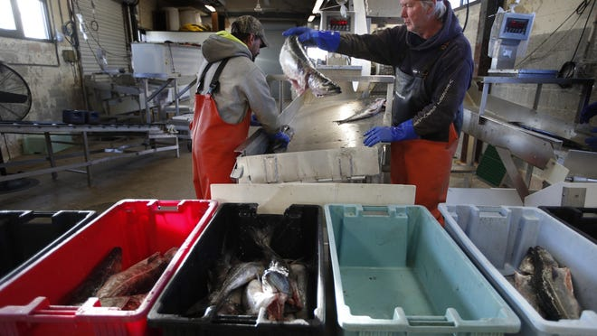 A small load of pollack is sorted as it comes off a boat at the Portland Fish Exchange in Portland, Maine, March 25, 2020. The amount of commercial fishing taking place worldwide has dipped since the start of the coronavirus pandemic, but scientists and conservation experts say it's unclear if the slowdown will help jeopardized species of sea life to recover.