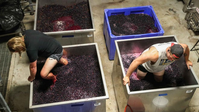 Josh Fritsche and Tyler Wolz punch down grapes July 23 at the Slate Mill Wine Collective in Fredericksburg. Tasting rooms are currently shut down, but grape harvesting and winemaking continue at local wineries.