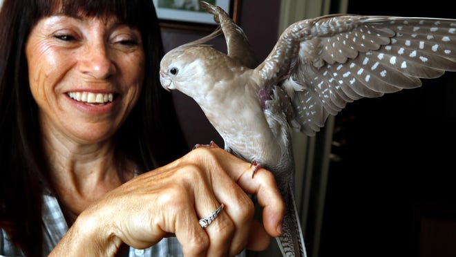 """Lidia Goodinson, of Warwick, and her cockatiel, Joy,"""" which flew away and was found in good shape 40 miles away in Massachusetts."""